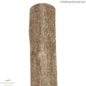 Holzpfosten Hasel rund, naturbelassen, ungespitzt Ø 7-9  x  200